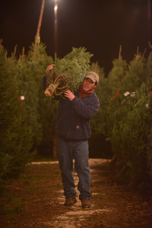 Sage at Retail Christmas Tree Lot Long Island NY
